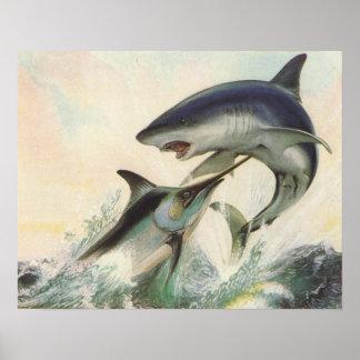 Pescados - aguja negra y tiburón de Mako Póster