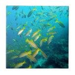 Pescados amarillos de los mordedores en el teja