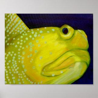 Pescados amarillos del gobio del vigilante póster