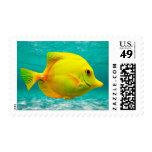 Pescados amarillos franqueo