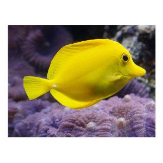 Pescados amarillos tarjetas postales
