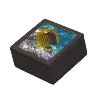 Pescados amarillos y negros del ángel cajas de joyas de calidad