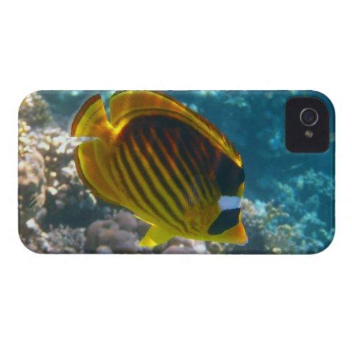 Pescados amarillos y negros del ángel Case-Mate iPhone 4 carcasas