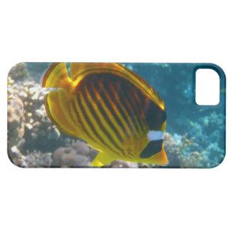 Pescados amarillos y negros del ángel iPhone 5 carcasa