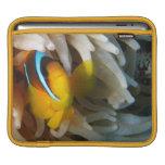 Pescados anaranjados del payaso mangas de iPad