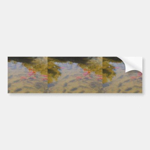 Pescados anaranjados en la charca de agua potable etiqueta de parachoque