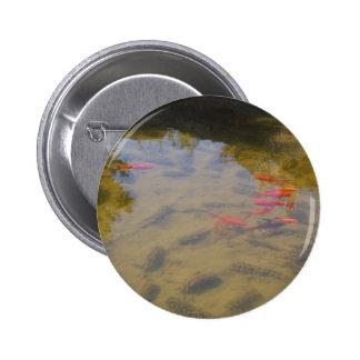 Pescados anaranjados en la charca de agua potable pin