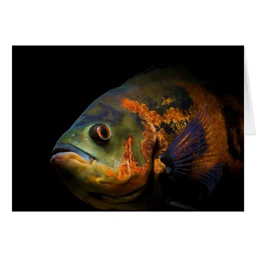 Pescados Astronotus Ocellatus de Óscar Felicitaciones