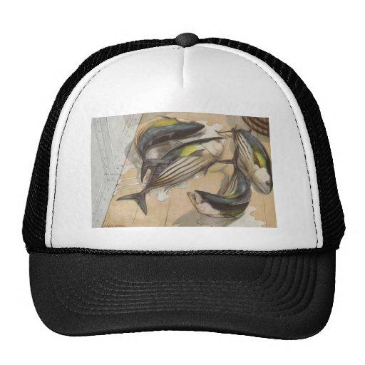 Pescados - atún rayado - pelamis del Katsuwonus Gorro
