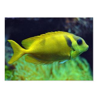 """pescados Azul-manchados Siganus Corallinus de Invitación 5"""" X 7"""""""
