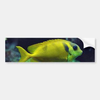 pescados Azul-manchados Siganus Corallinus de Spin Pegatina Para Auto