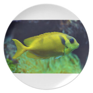 pescados Azul-manchados Siganus Corallinus de Spin Plato De Cena