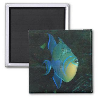 Pescados azules, amarillos y verdes - imán