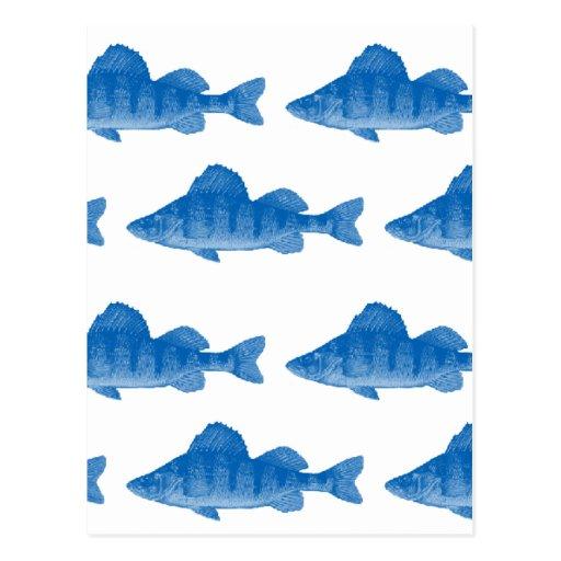 Pescados azules de la perca amarilla postal