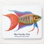 Pescados azules Mousepad del paraíso Alfombrillas De Ratón