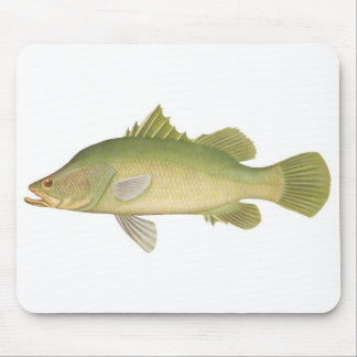 Pescados - calcarifer de Barramundi - de Lates Tapete De Ratones