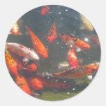 Pescados coloridos de Koi en una charca Pegatina Redonda