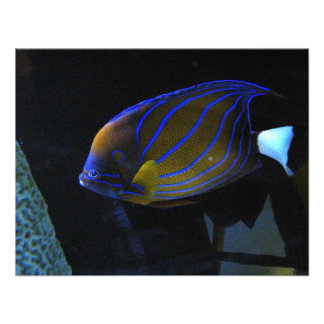 Pescados coloridos invitación personalizada