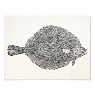 Pescados comunes de la platija del lenguado del arte fotográfico