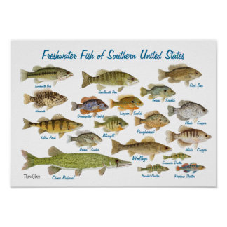 Pescados de agua dulce de Estados Unidos Póster