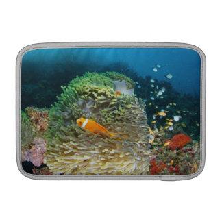 Pescados de anémona de Maldivas que nadan bajo el  Fundas Macbook Air