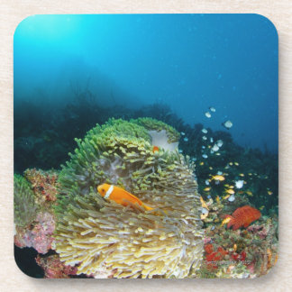 Pescados de anémona de Maldivas que nadan bajo el  Posavasos