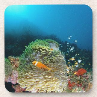 Pescados de anémona de Maldivas que nadan bajo el  Posavasos De Bebidas