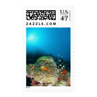 Pescados de anémona de Maldivas que nadan bajo el Sellos Postales