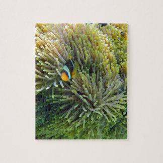 pescados de anémona rompecabeza con fotos