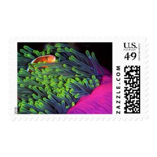 Pescados de anémona que ocultan en la anémona, timbre postal