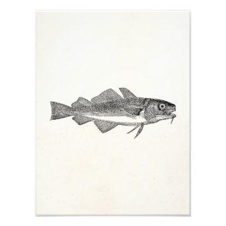 Pescados de bacalao comunes del vintage - fotografía