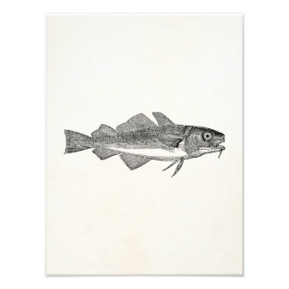 Pescados de bacalao comunes del vintage - impresion fotografica