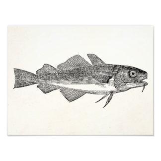 Pescados de bacalao comunes del vintage - arte con fotos