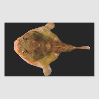 Pescados de Chaunax Stigmaeus Pegatina Rectangular