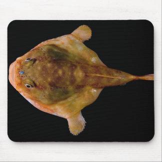Pescados de Chaunax Stigmaeus Tapetes De Raton