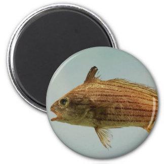 Pescados de Cubbyu Imán Redondo 5 Cm