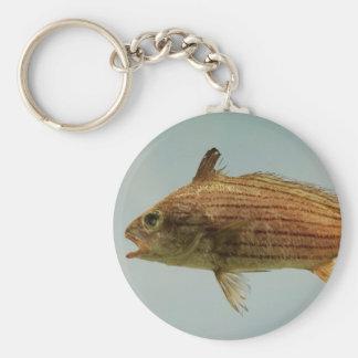 Pescados de Cubbyu Llavero Redondo Tipo Pin