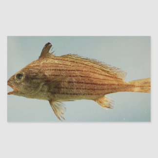 Pescados de Cubbyu Pegatina Rectangular