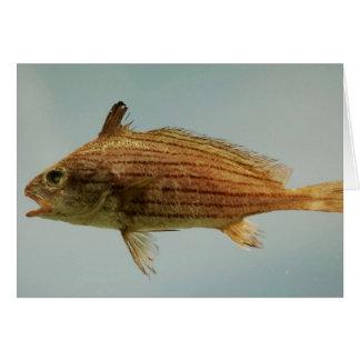 Pescados de Cubbyu Tarjeta De Felicitación
