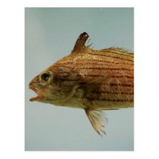 Pescados de Cubbyu Tarjeta Postal