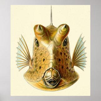 Pescados de cuernos extraños poster