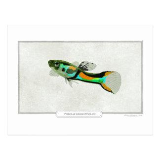 Pescados de Endler Tarjeta Postal