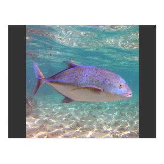 Pescados de Hawaii Trevally Postales