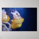 Pescados de jalea del océano profundo poster