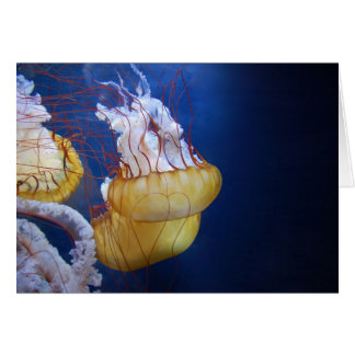 Pescados de jalea del océano profundo tarjetón