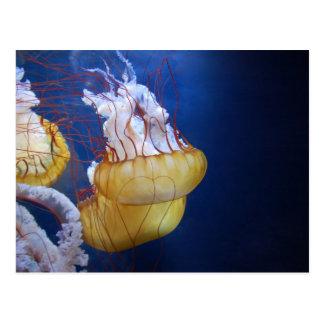 Pescados de jalea del océano profundo postal