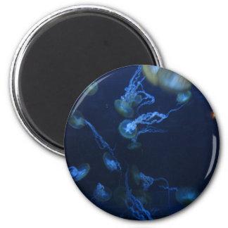 Pescados de jalea imán redondo 5 cm
