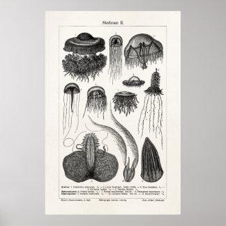 Pescados de jalea retros del mar de la especie de  posters
