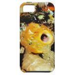 Pescados de Koi (3) iPhone 5 Coberturas