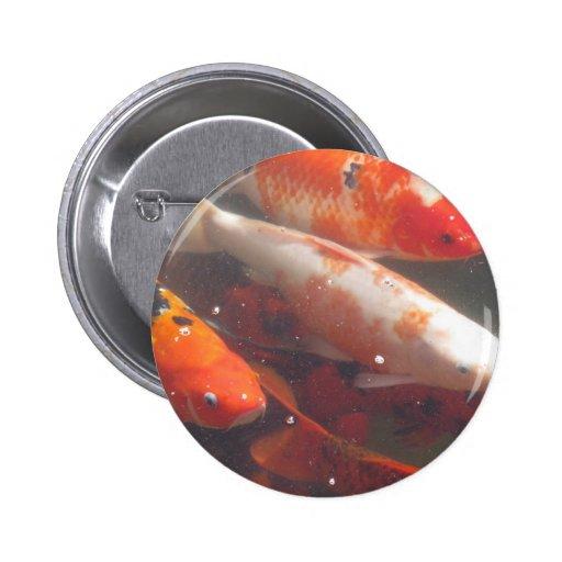 Pescados de Koi del japonés Pins
